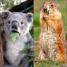 Even animals can be surprised, look at the moment