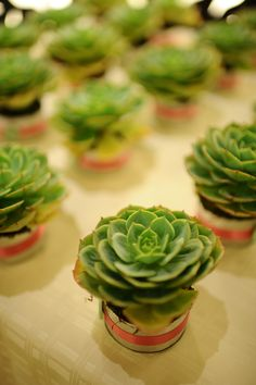 Succulents! Wedding favors Guads & Sega #martandsega Artichoke, Wedding Favors, Succulents, Amp, Vegetables, Food, Wedding Keepsakes, Succulent Plants, Artichokes