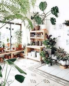 When we have a sun room, it will looks like this. Filled with potted plants and softness