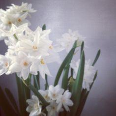 Paper whites {Botany Floral Studio}