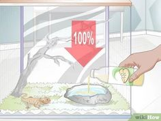Image titled Teach a Bearded Dragon to Drink from a Water Bowl Step 2 Bearded Dragon Funny, Bearded Dragon Habitat, Bearded Dragon Cage, Bearded Dragon Terrarium, Russian Tortoise, Pet Dragon, Mother Of Dragons, Pet Store, Exotic Pets