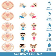 Baby teething chart Royalty Free Vector Image - VectorStock baby breastfeeding Best Picture For Baby Supplies goals For Your Taste You are looking for something, a Baby Trivia, Baby Teething Chart, Baby Teething Remedies, Baby Teething Schedule, Signs Baby Is Teething, Baby Constipation Remedies, Teething Symptoms, Natural Teething Remedies, Massage Bebe