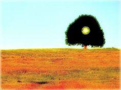 The Tree Mountains, Nature, Travel, Naturaleza, Viajes, Traveling, Natural, Tourism, Scenery