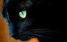 black cats with green eyes - Google Search
