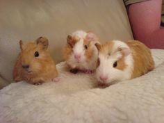 Pig - Animals Pictures