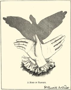 'A Bird in Flight' Shadow Puppet 6. From: 'Shadow Puppets - A series of novel and amusing figures formed by the hand' by Henry Bursill. Originally published by Griffith and Farran in 1859.