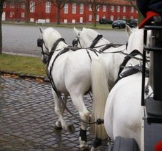 Castle and Palace 2 Day Tour - Studniska Horse Centrum Visit Poland, Day Tours, Palace, Castle, Horses, History, Animals, Life, Historia