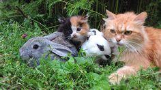 Раз Два Три Четыре Пять Найдите Рыжего котёнка 1 2 3 4 Find the Redhead Kitten #кошки #прикол #kitten #cat #funny https://fotki.yandex.ru/next/users/alllebedev/album/229122/view/906840