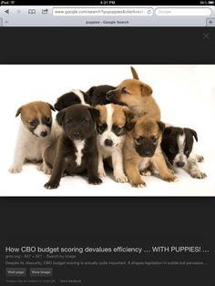 Sarasota Herald Tribune Dogs For Sale