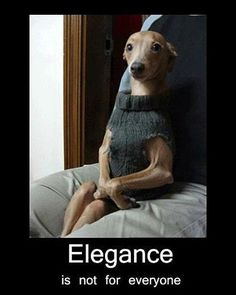 Elegance is not for everyone - so true
