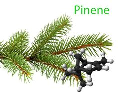 Pinene in cannabis