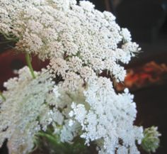 Love the idea of using Queen Anne's Lace since it grows wild here.