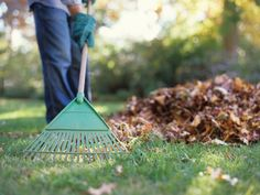 Tips to help your lawn and landscape recover from the difficult summer, and spring back into shape next year.