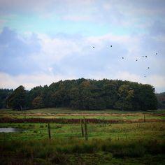 Lund ved Aarup i efterårsfarver #visitfyn #fyn #visitdenmark #naturelovers #natur #denmark #danmark #dänemark #landscape #nofilter #sky #assens #mitassens #forrest #fynerfin #lund #skov #vielskernaturen #visitassens #instapic #picoftheday
