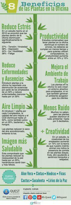 8 Beneficios de las Plantas en la Oficina
