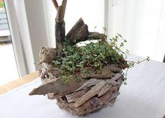 TD70 – Schwemmholz als Tischdeko! Topf aus Schwemmholz, bepflanzt mit einer Sukkulente! Preis 29,90€