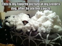 Funny Animal Pictures Of The Day - 16 Images #funnydoghilarious