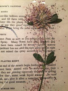 @dansmoncrane  | Pressed Flowers & Glitter | Season of Words | Get Messy Art Journal