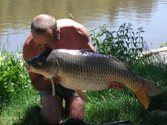 Lodge lakes carp