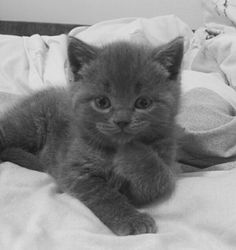 OOOH, SHOOT!! <3 MAKES ME WANNA GO GET ANOTHER RUSSIAN BLUE KITTEN....OR TWO!! <3