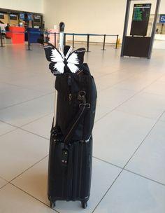 #TEDxPTP #effetpapillon, même en voyage.
