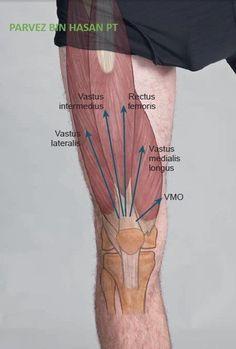 Body Muscle Anatomy, Human Body Anatomy, Human Anatomy And Physiology, Leg Anatomy, Anatomy Study, Physical Therapy Student, Human Body Facts, Anatomy Images, Medical Anatomy