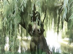 A Walk Beside the Willow Tree by Echo Morse She must have been The model; the artist was Observing when the willow tree was painted Down a street of my staying Such innocent babies would almost Just as easily not be born to suffer The sight of such mysterious earths:    What offer does this land hold...... Read More   A Walk Beside the Willow Tree by Echo Morse…
