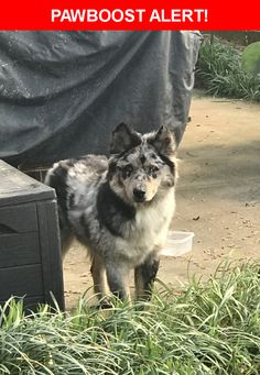 Is this your lost pet? Found in Charlotte, NC 28269. Please spread the word so we can find the owner!  Very Shy and Timid, appears to be blind in one eye. Blue Green Collar without tags.   Nearest Address: Near Davis Lake Pkwy & David Cox Rd