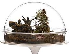 The only thing I don't like about the Terradome is that it is made of acrylic. Otherwise, very cool.