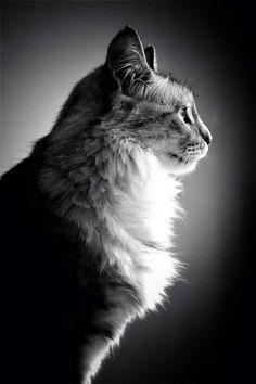 Photo prise par Chloe Badaya DelarocheLes chats auraient été domestiqués pour la première fois au néolithique (entre -6 000 et -8 000 av. J-C.).Trouvez la meilleure assurance pour votre animal de compagnie grâce à ce comparateur en ligneDécouvrez d'autres images de Chloé Badaya Delaroche