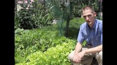 MU Extension's Nathan Brandt instructs gardeners on how to deal with the issue of too much lead in urban soils.