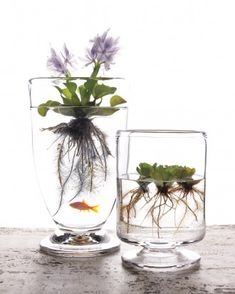46 Creative Indoor Water Garden Ideas For Best Indoor Garden Solution. The next step is to pick the correct plants that could grow in water. If you own a water feature in your rooftop garden, then it . Container Water Gardens, Container Gardening, Plant Containers, Indoor Water Garden, Indoor Plants, Indoor Pond, Pond Plants, Glass Garden, Herb Garden