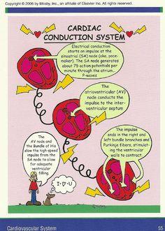 Mosby's Pathophysiology Memory NoteCards Medical Surgical Nursing, Cardiac Nursing, Nursing Mnemonics, Pathophysiology Nursing, Pharmacology Mnemonics, Nurse Teaching, Med Surg Nursing, Nursing Information, Nursing Tips