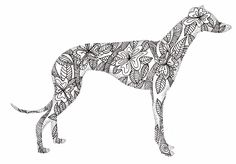 Greyhound doodle | greyhound doodle ink on bristol board | kelly bevan | Flickr