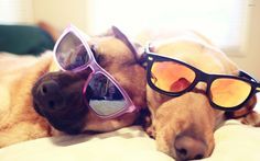 Get our your favorite pair of sunglasses because June 27th is Sunglasses Day! #Sunglasses #CoolDogs