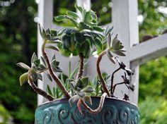 Succulent habitat.