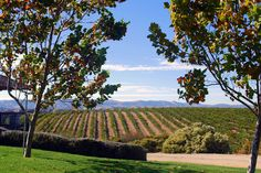 Eberle and Niner Wineries, Paso Robles, California