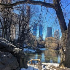 "60 Likes, 1 Comments - Polina (@uptownladyny) on Instagram: ""Central Park, one of my favorite places."""