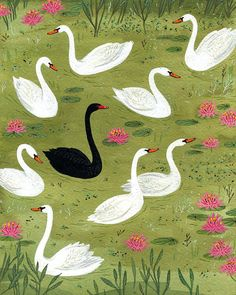 the black swan. Bird Illustration, Pattern Illustration, Black Swan, Pink Black, Swans, Of Wallpaper, Bird Art, Becca, Fine Art Paper