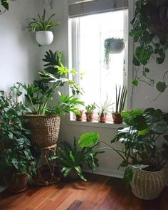 56 Easy Plants Design For Indoor Decoration - Decoralink Easy House Plants, House Plants Decor, Plant Decor, Interior Design Plants, Plant Design, Garden Design, Window Plants, Hanging Plants, Diy Hanging