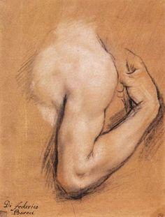 Federico Fiori Barocci , Study of a Bent Right Arm (c. 1590). Pastel on chamois