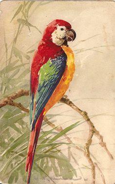 Catherine Klein - pappagallo