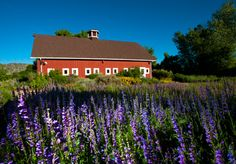 Chatfield location in Denver, Colorado| Denver Botanic Gardens working farm with dairy barn and silo.