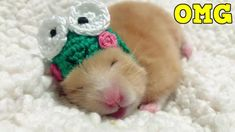 nice Funny Hamster Videos With Hats | Aweasome Hamster Compilation | Pets Adorable See more our video: Hamster Eating And Cute Everywhere: https://youtu.be/aZ7T3VtpN5w You Think You Saw Everything About Hamster : https://youtu.be/w...