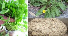 Green Yatra Blog 15 Herbal Home Remedies for Goitre - Green Yatra Blog