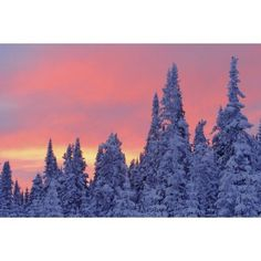 View Of Snow-Covered Trees And Sky At Twilight Quebec Canada Canvas Art - Yves Marcoux Design Pics (17 x 11)