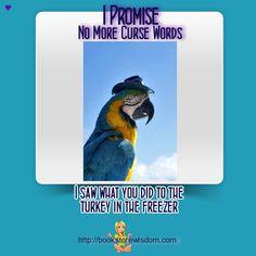 Parrot Promises #meme #funny picture #parrot http://proofreader.bookstorewisdom.com