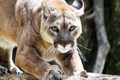 Animal Kingdom Beauty