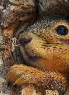 squirrel by Betsy Seeton Nature Animals, Animals And Pets, Baby Animals, Funny Animals, Cute Animals, Cute Creatures, Beautiful Creatures, Animals Beautiful, Cute Squirrel