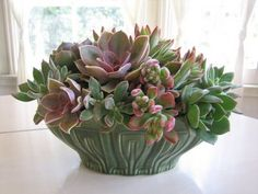 Love these Succulents - their colors and their shapes... Planter plays into their lines...